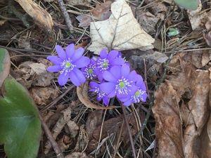 Весна идет!. Ярмарка Мастеров - ручная работа, handmade.
