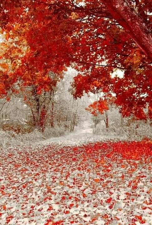 Minnesota.   Fall meets Winter