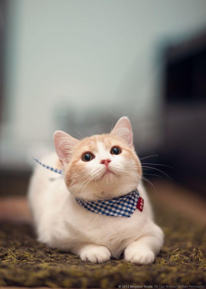 котята выросли