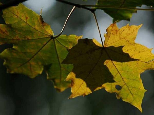 Вдохновляющая осень (фотографии) | Ярмарка Мастеров - ручная работа, handmade