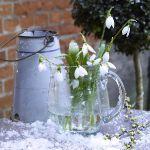 spring-flowers-new-ideas-snowdrops-and-crocus9.jpg