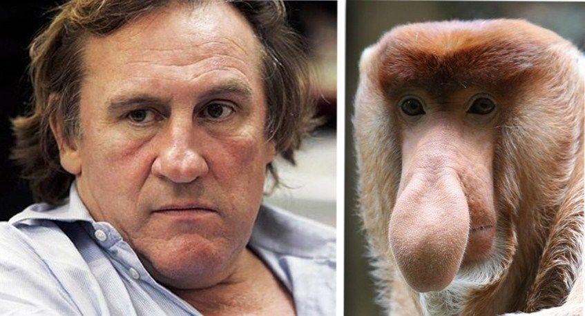всех жителей сравнить человека с животным по фото тогда она начнёт