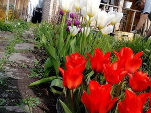 Душа требует весны! Фото моего сада.. Ярмарка Мастеров - ручная работа, handmade.