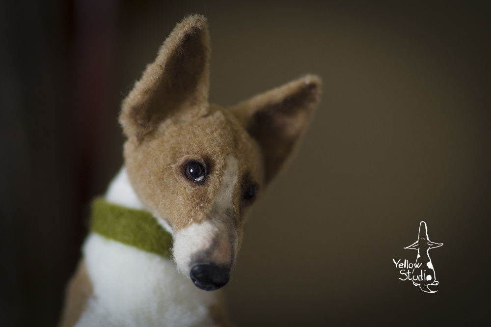 Моня собак, фото № 2