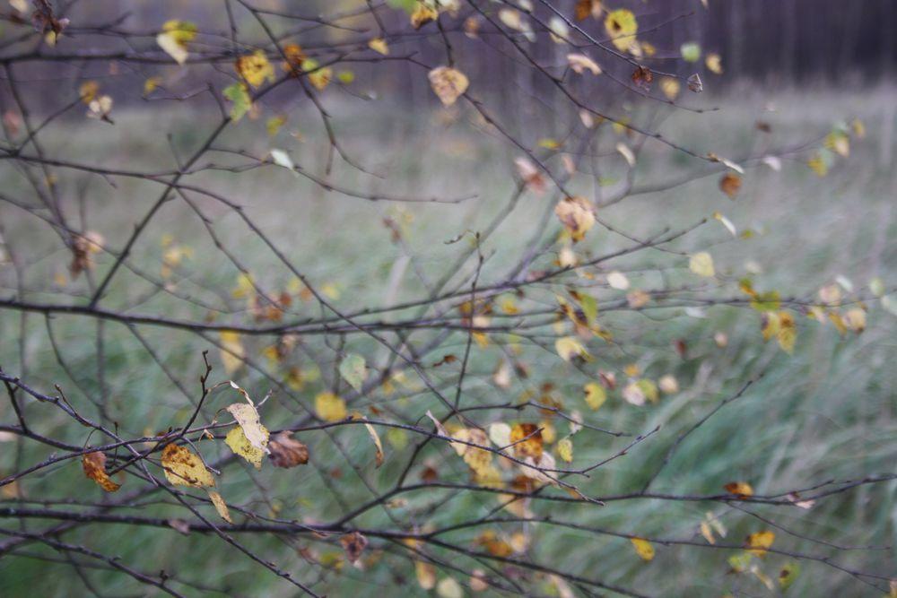 травушка-муравушка, цветы