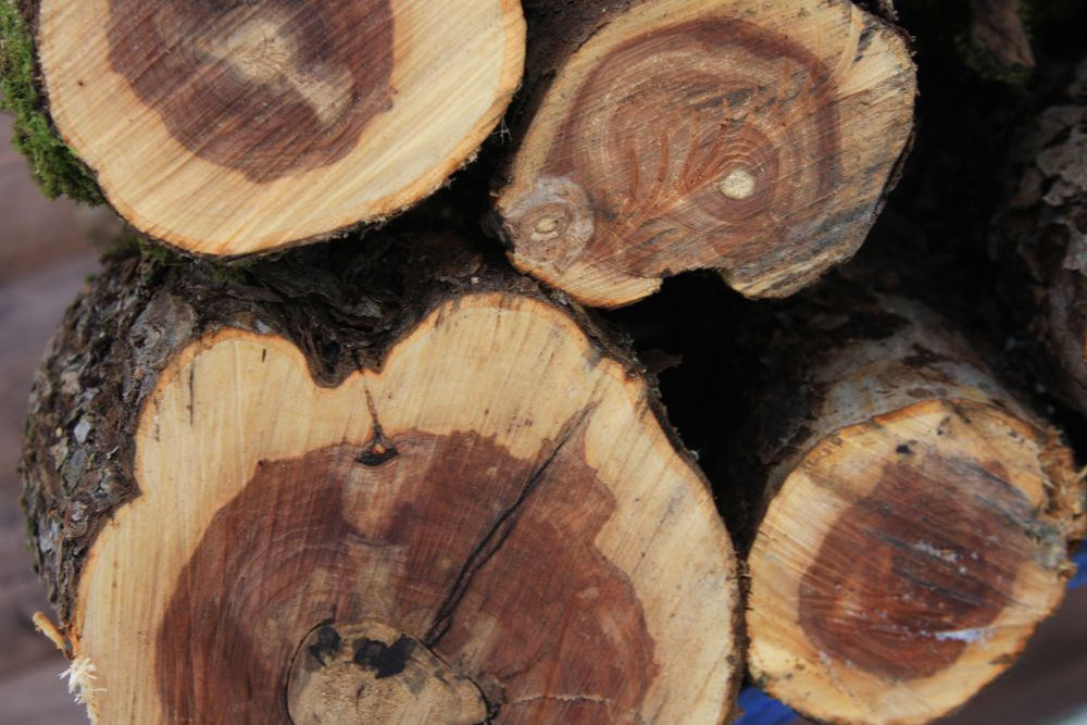 дерево, материалы для рукоделия, яблоня, новость, для кухни, подставка