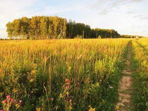 Август ,полевые цветы ,простор!. Ярмарка Мастеров - ручная работа, handmade.