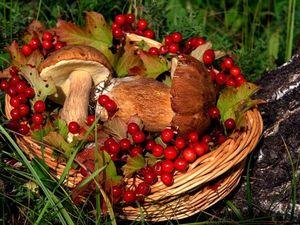 """Конкурс коллекций """"Осенние дары от Юлии LABORERA"""". Ярмарка Мастеров - ручная работа, handmade."""