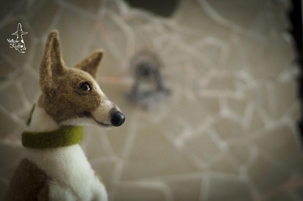 Моня собак, фото № 15