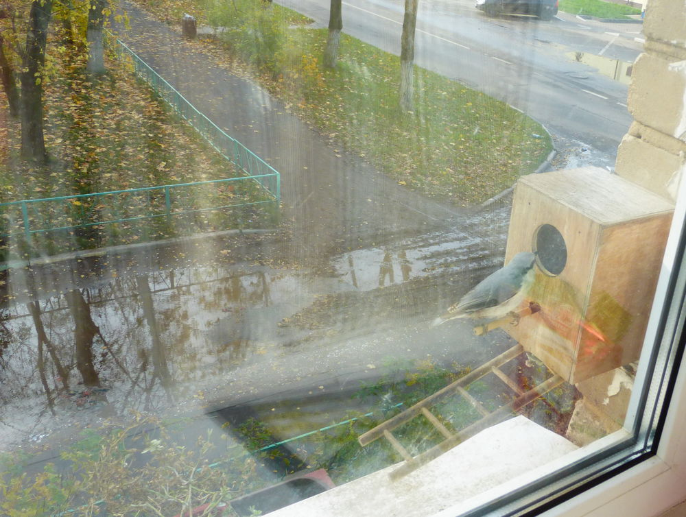 А из нашего окна птица наглая видна, фото № 4