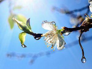 Весна время  жить!!! | Ярмарка Мастеров - ручная работа, handmade