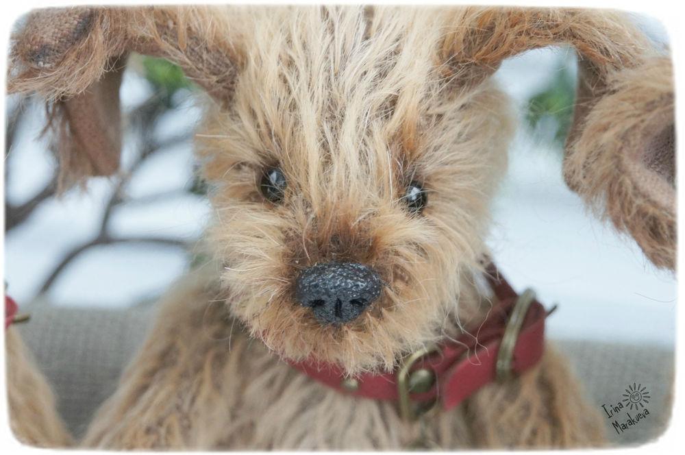 символ года, щенок, teddy dog