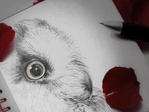 Совы. Карандашные рисунки — эскизы для росписи фарфора часть 2. Ярмарка Мастеров - ручная работа, handmade.