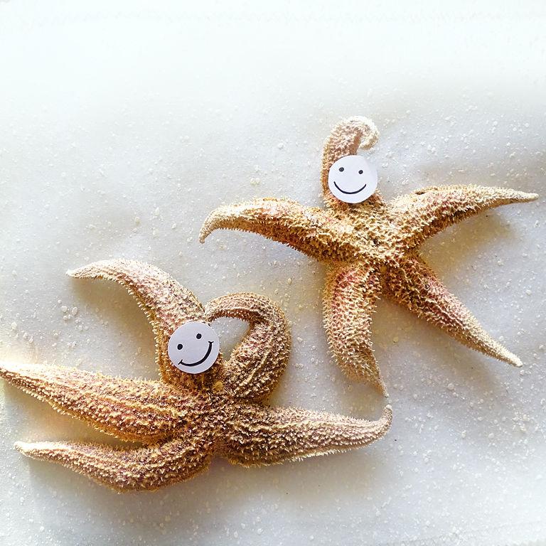 морские звезды, морской сувенир