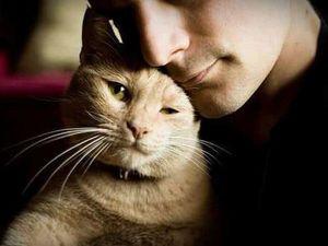 Именно от Кошки Зависит Ваше Благополучие. Ярмарка Мастеров - ручная работа, handmade.