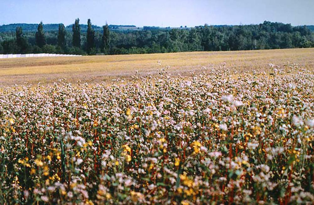 Подушки с гречневой шелухой и травами, их оздоровительный и ортопедический эффект