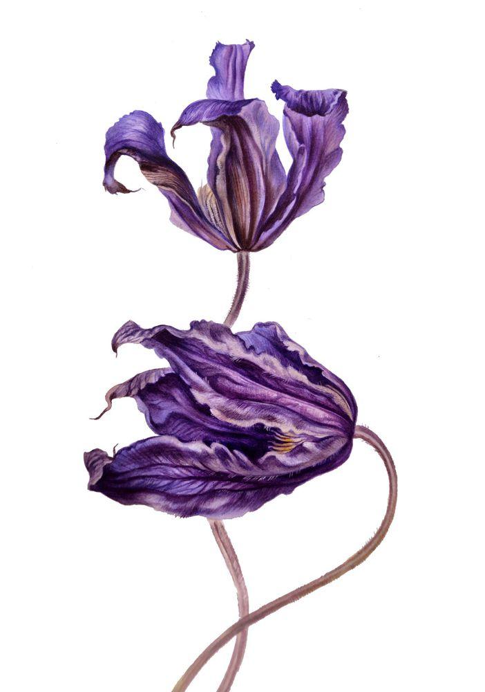 живопись, тюльпаны