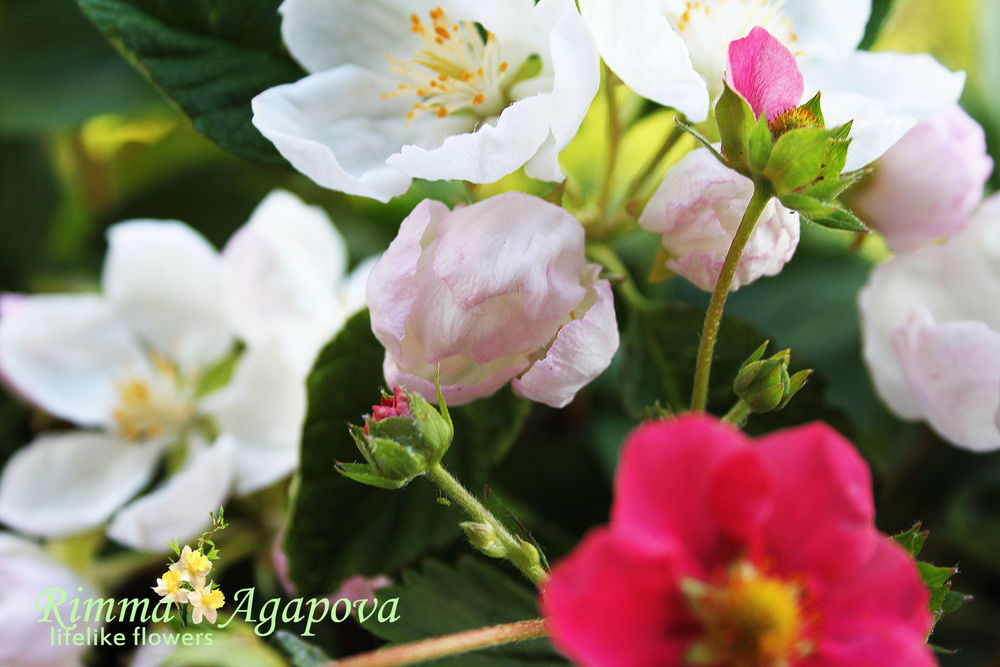 молд яблони
