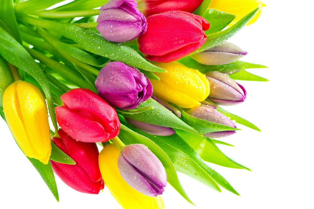 8 марта подарок, весенняя акция, весенние скидки