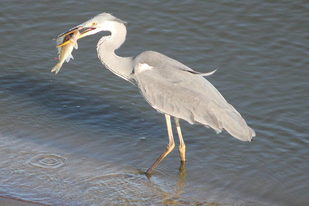 меня такой птицы калининградской области фото с названиями типично подобное для