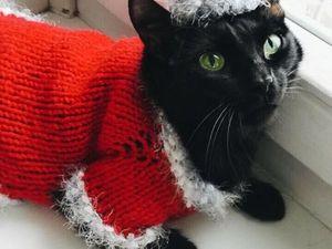 Вяжем новогодний костюмчик для кота. Ярмарка Мастеров - ручная работа, handmade.