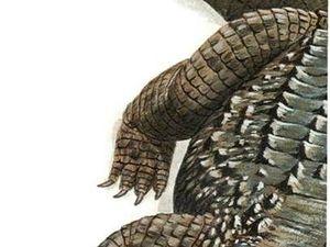 Аллигатор,крокодил,питон? Кто ждал престижную экзотику?   Ярмарка Мастеров - ручная работа, handmade