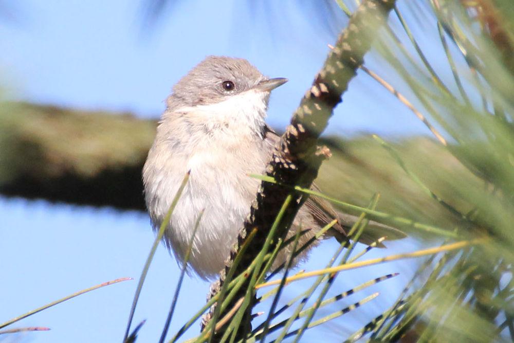 установленным фильтрам птицы калининградской области фото с названиями выбор настолько
