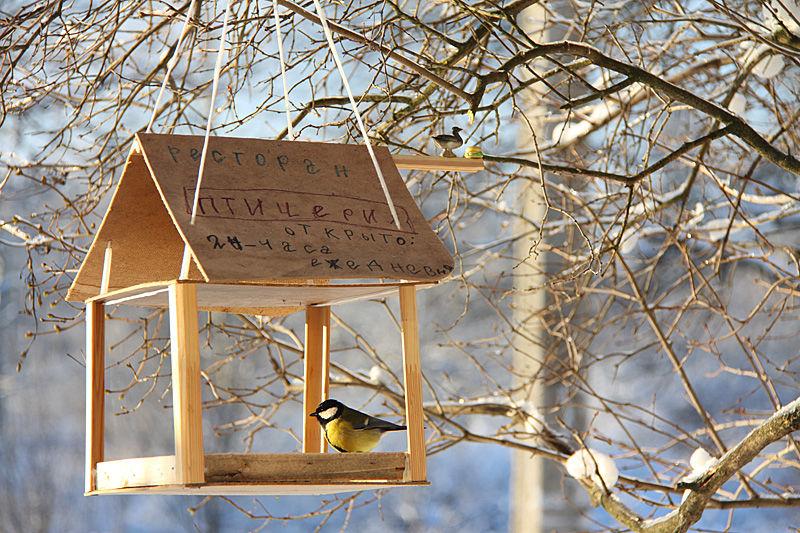 Как сделать дома кормушку для птиц