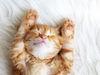 21 идея домиков для котиков и ещё несколько идей для наших любимых питомцев - Ярмарка Мастеров, ручная работа, handmade