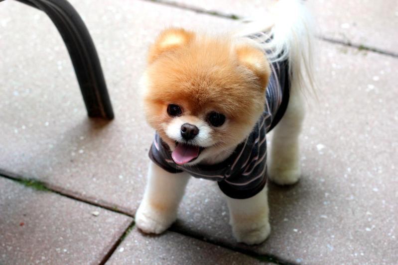 """Тема дня """"ПОГОВОРИМ о маленьких собачках"""" - Ярмарка Мастеров - ручная работа, handmade"""