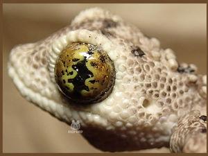 Лепим геккона из полимерной глины. Часть 2. Ярмарка Мастеров - ручная работа, handmade.