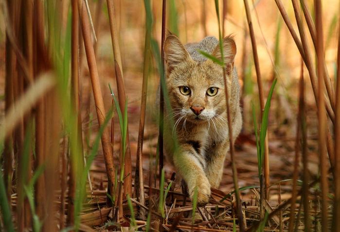 фото котики