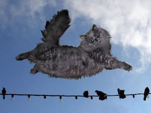 Баллада о летучих кошках   Ярмарка Мастеров - ручная работа, handmade