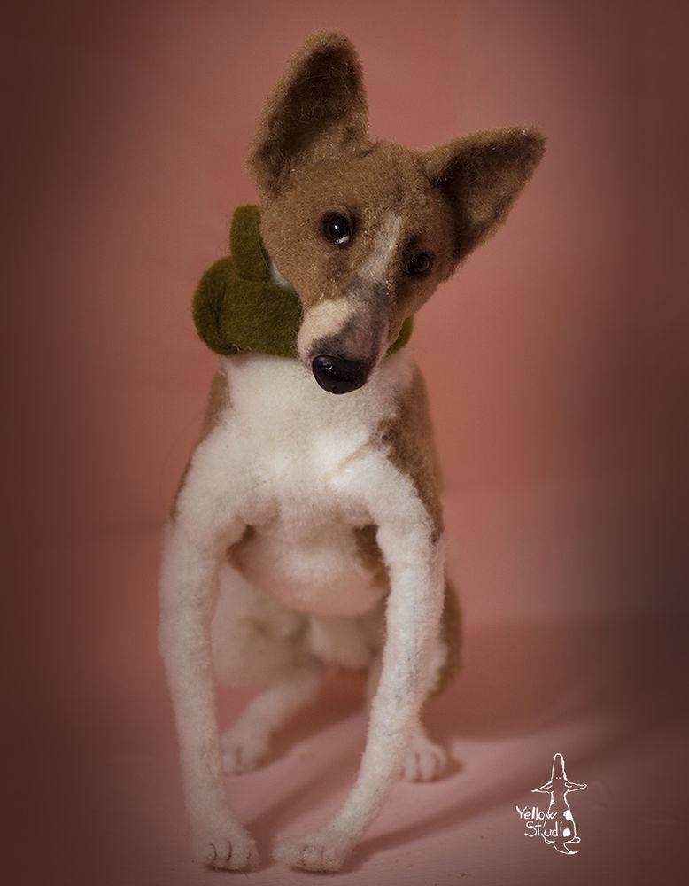 Моня собак, фото № 14