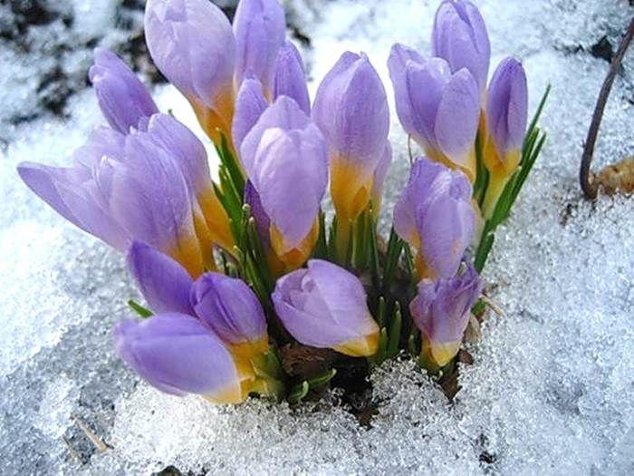 будет отвлекать второй день весны фото самых распространенных