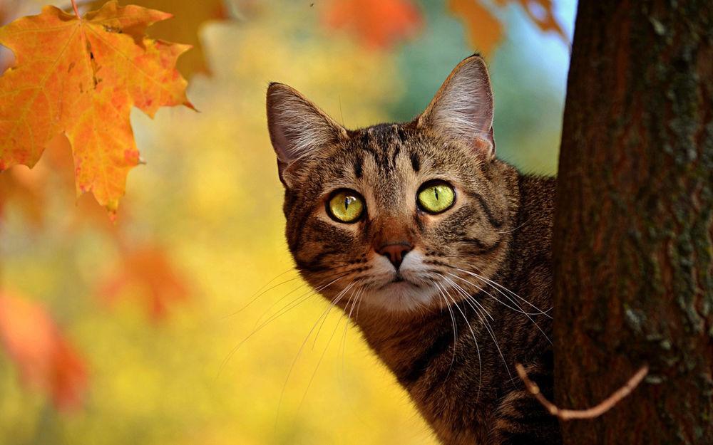 осень, 1 сентября, осенне листья, поздравление, об осени