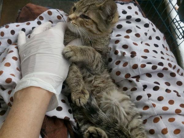Не проходите мимо! Помогите котенку! | Ярмарка Мастеров - ручная работа, handmade