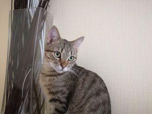 Кот или кошка? | Ярмарка Мастеров - ручная работа, handmade
