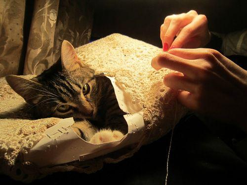 Ну как без кошек???, фото № 10