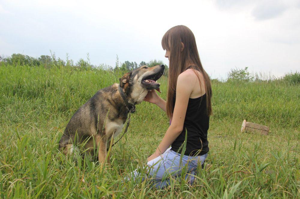 помощь животным, приют для животных, помощь собаке, помощь приюту, благотворительность, волонтеры, приют, помощь, животные, собаки