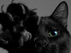 День чёрной кошки. Ярмарка Мастеров - ручная работа, handmade.