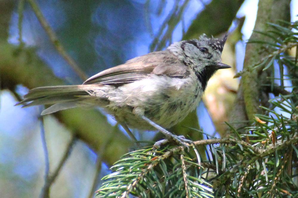 Городские птицы калининграда с фото том, что
