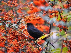Музыка для души. Осень...Падают листья. Ярмарка Мастеров - ручная работа, handmade.