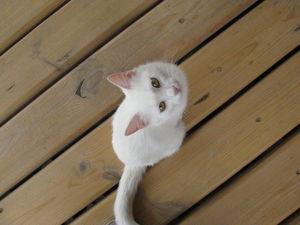 А у нас сегодня кошка, родила вчера котят... | Ярмарка Мастеров - ручная работа, handmade
