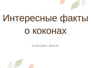 Интересные факты о коконах. Ярмарка Мастеров - ручная работа, handmade.