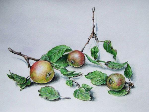 Видеоурок: рисуем дикие яблоки в технике «акварельная графика» | Ярмарка Мастеров - ручная работа, handmade