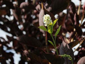 А у нас снова весна! :-). Ярмарка Мастеров - ручная работа, handmade.