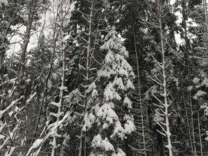 Зимушка-зима. Ярмарка Мастеров - ручная работа, handmade.