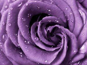 Розыгрыш сумочки-розы от Татьяны Фот | Ярмарка Мастеров - ручная работа, handmade