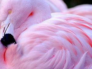 Розовый фламинго как источник вдохновения для дизайнеров одежды. Ярмарка Мастеров - ручная работа, handmade.